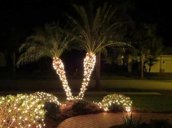 Christmas lights keeping palm tree warm!