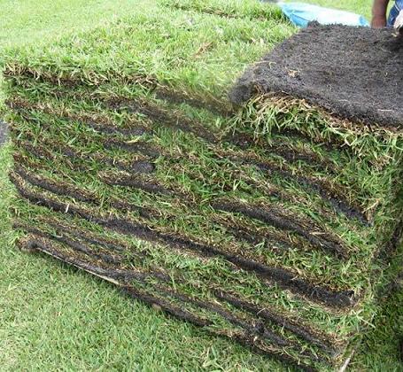 St. Augustine Grass Pallet.