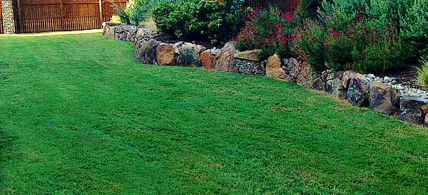Lawn care after a flood.