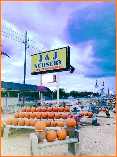 Pumpkin patch at J&J Nursery and Madison Gardens Nursery, Spring, TX.
