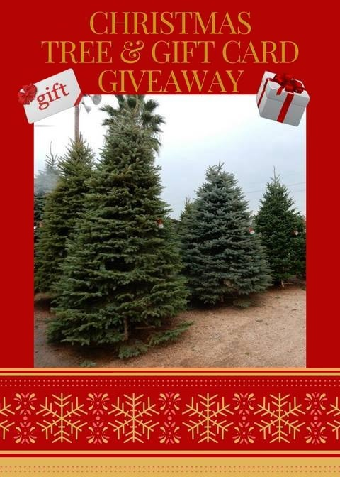 Christmas Tree Giveaway at J&J Nursery and Madison Gardens Nursery, Spring, TX