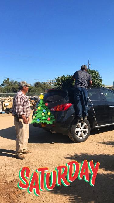 Loading a tree onto a car!