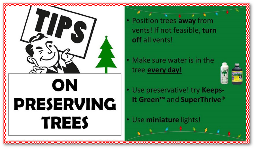 Tips on preserving trees.