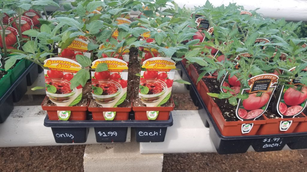 Tomato vegetables to plant!