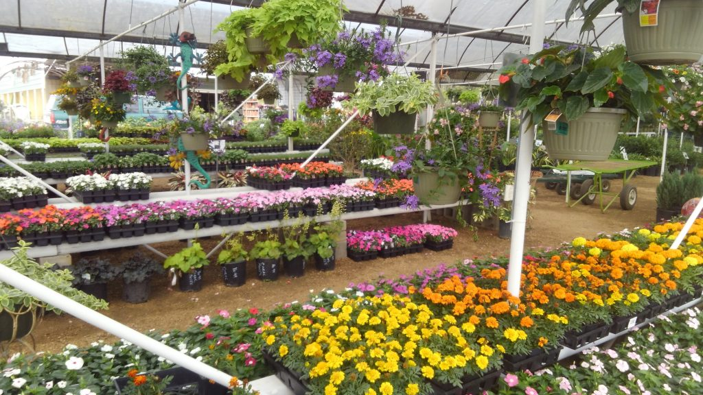 Bright and cheerful flats of colors for your gardens!