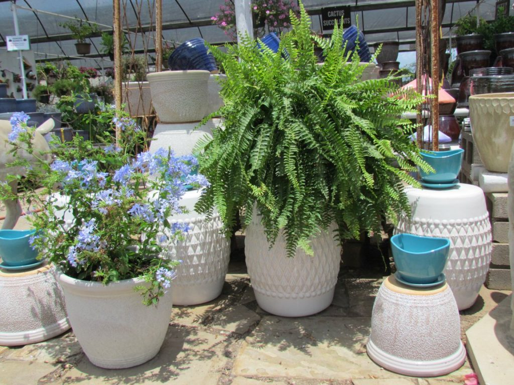 Perfect summer pottery!