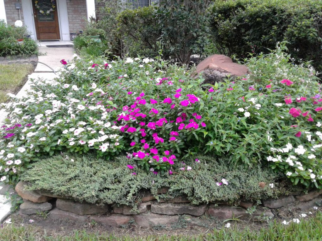 These flowerbeds are exploding with color because they are planted in mushroom compost!