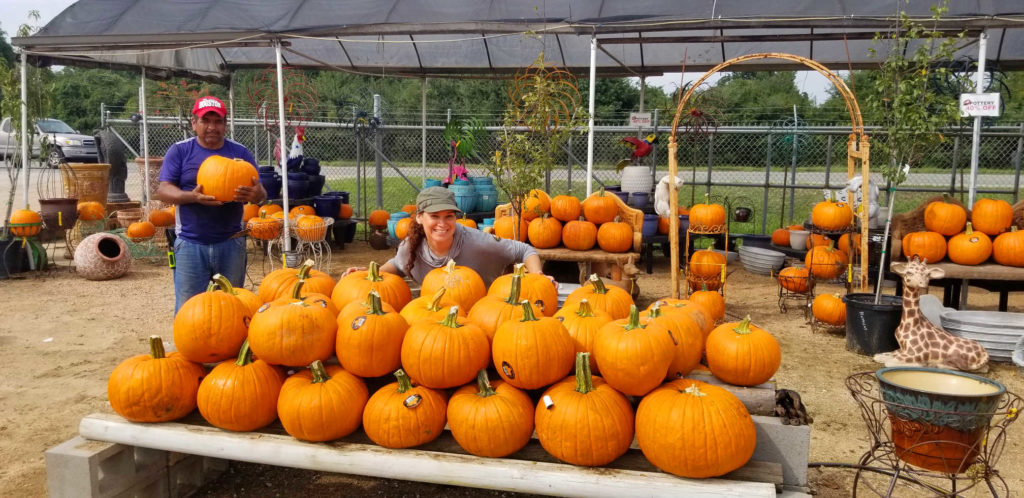 Carving pumpkins for sale at Madison Gardens Nursery!