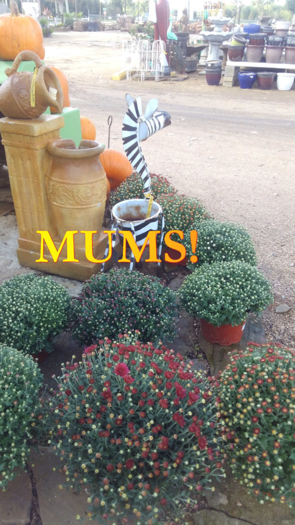 Mums for everyone!
