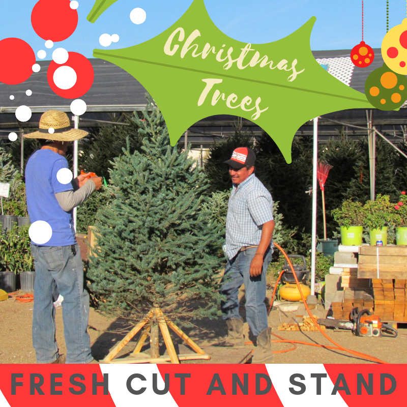 Get your tree with a fresh cut and stand!