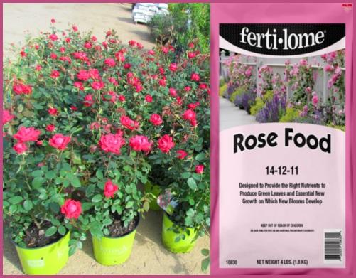 Rose Food fertilizer for roses.