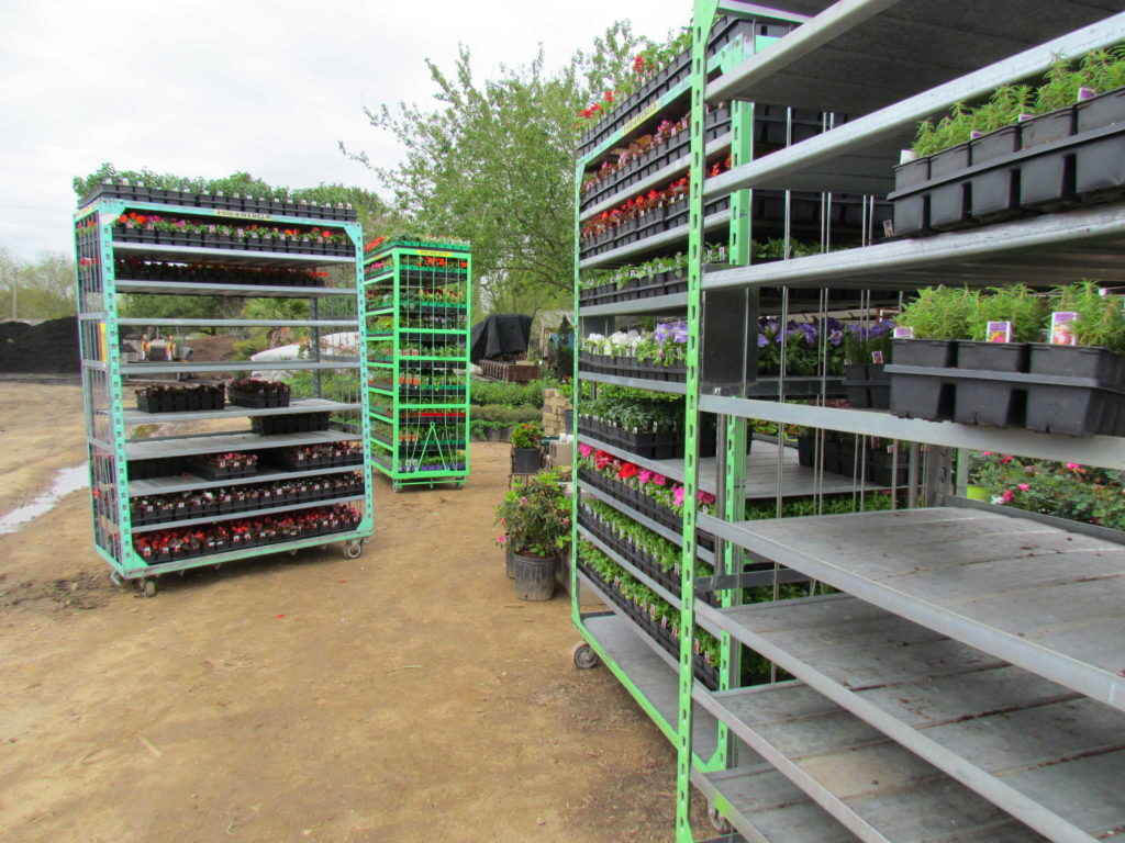 Unloading flats of flowers and vegetables!