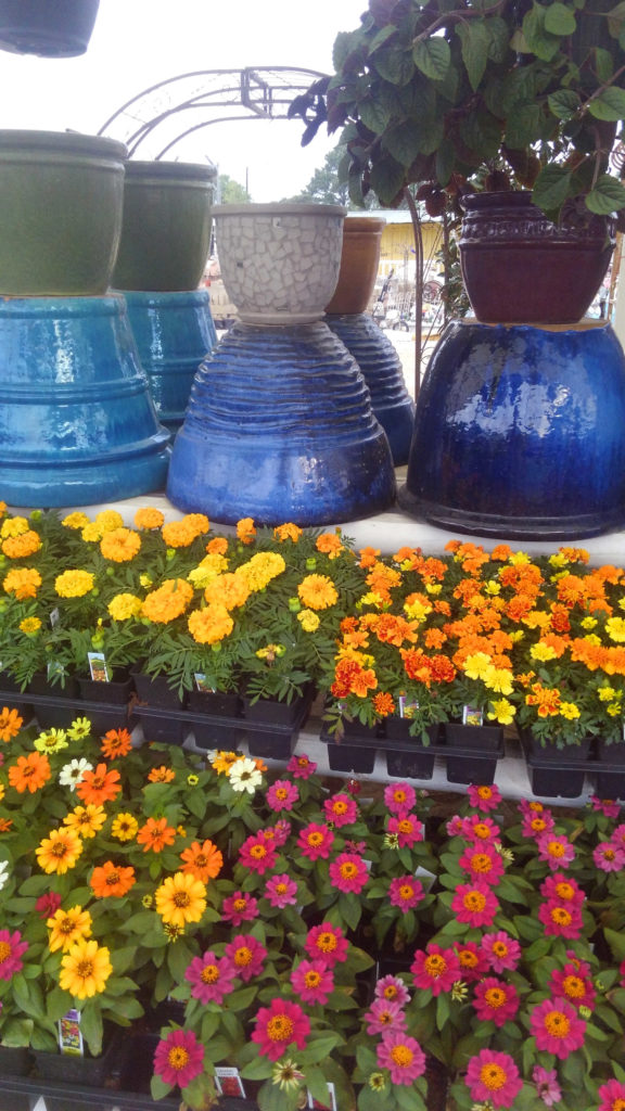 Marigolds and pots!