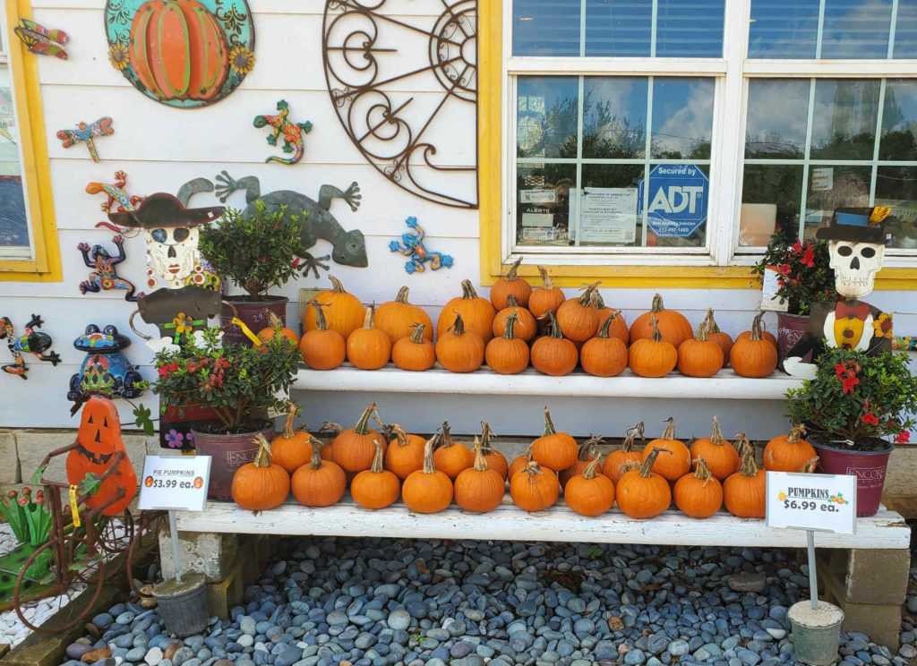 Make a pie with these pumpkins!