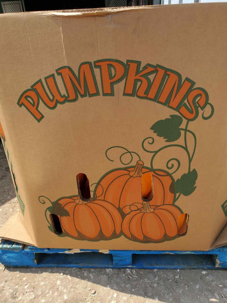 Pumpkins for fall season!
