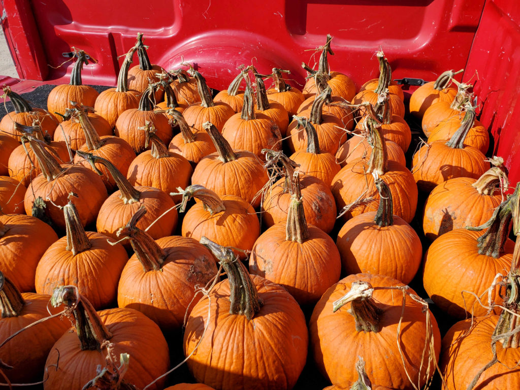 Want to go for a pumpkin ride? New pumpkins from Madison Gardens Nursery!