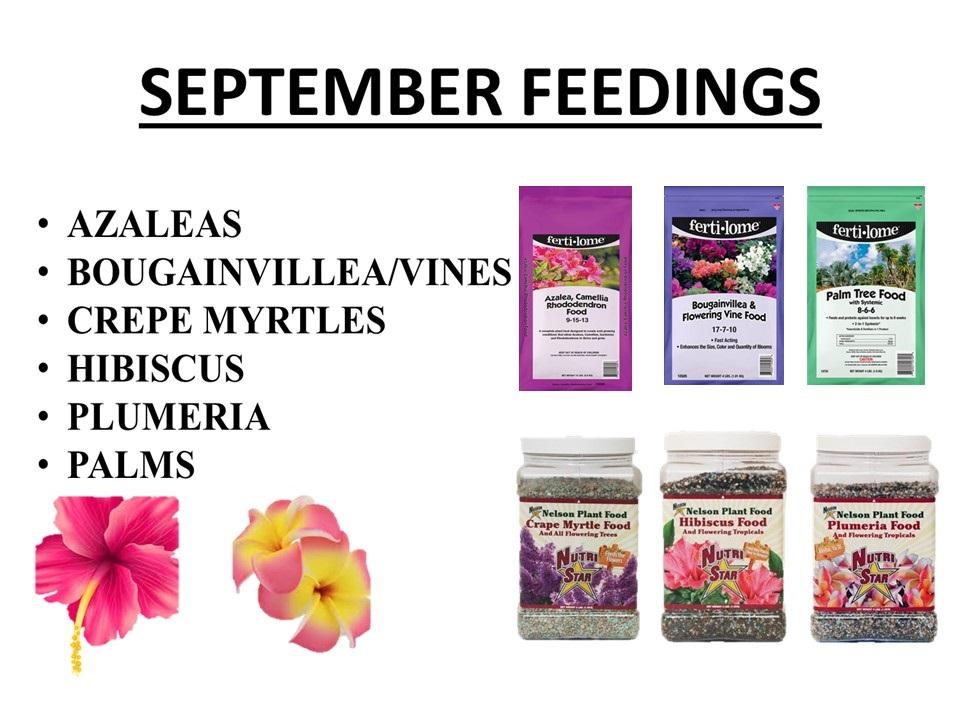 September feedings fertilizers for your azaleas, bougainvilleas/vines, crape myrtles, hibiscus, plumeria, palms.
