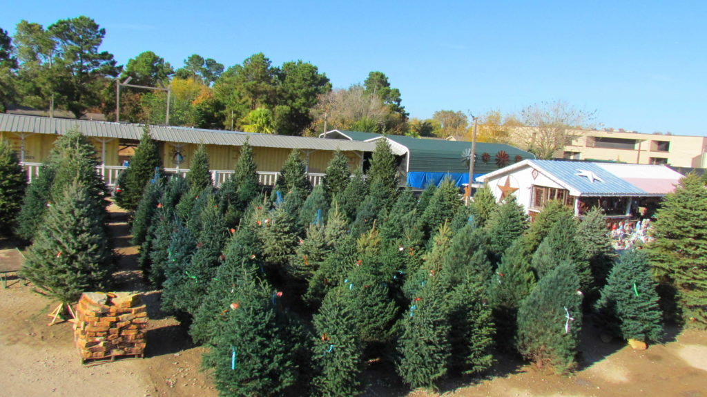Hundreds of trees to choose from. Blue spruce, black hills spruce, scotch pine, fraser fir, balsam fir, concolor fir and douglas fir!