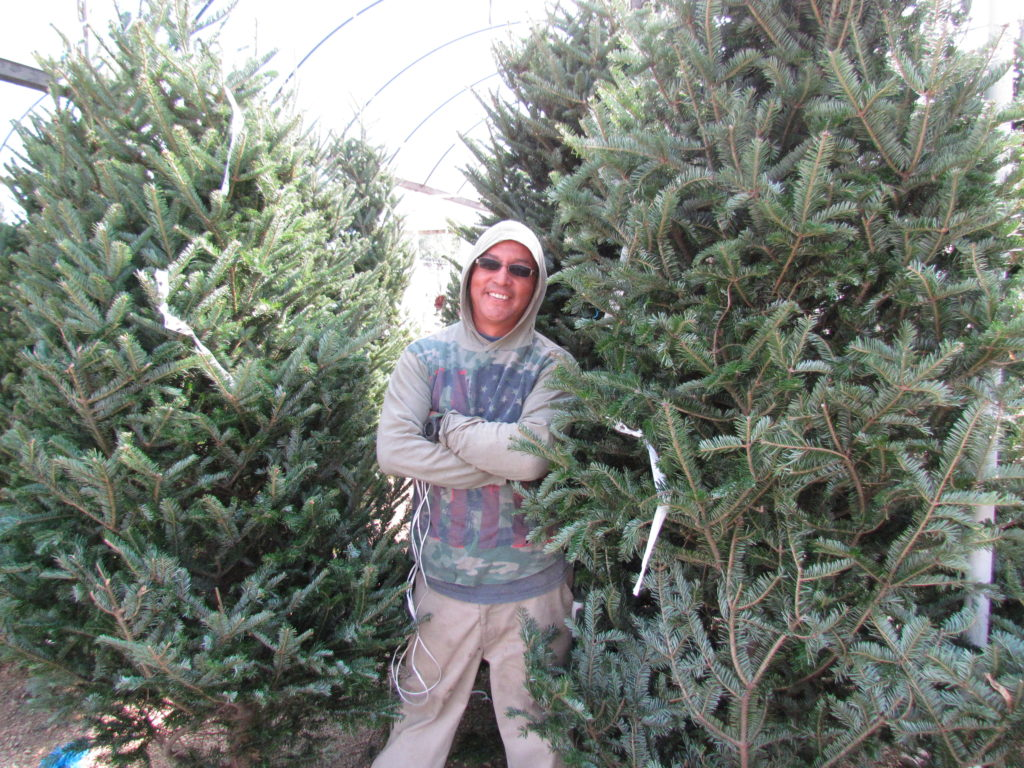 Christmas Trees arrive before Thanksgiving!