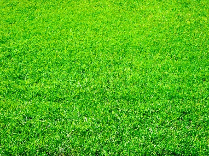 Get New Lawn Starter Fertilizer to prepare for a beautiful lawn.