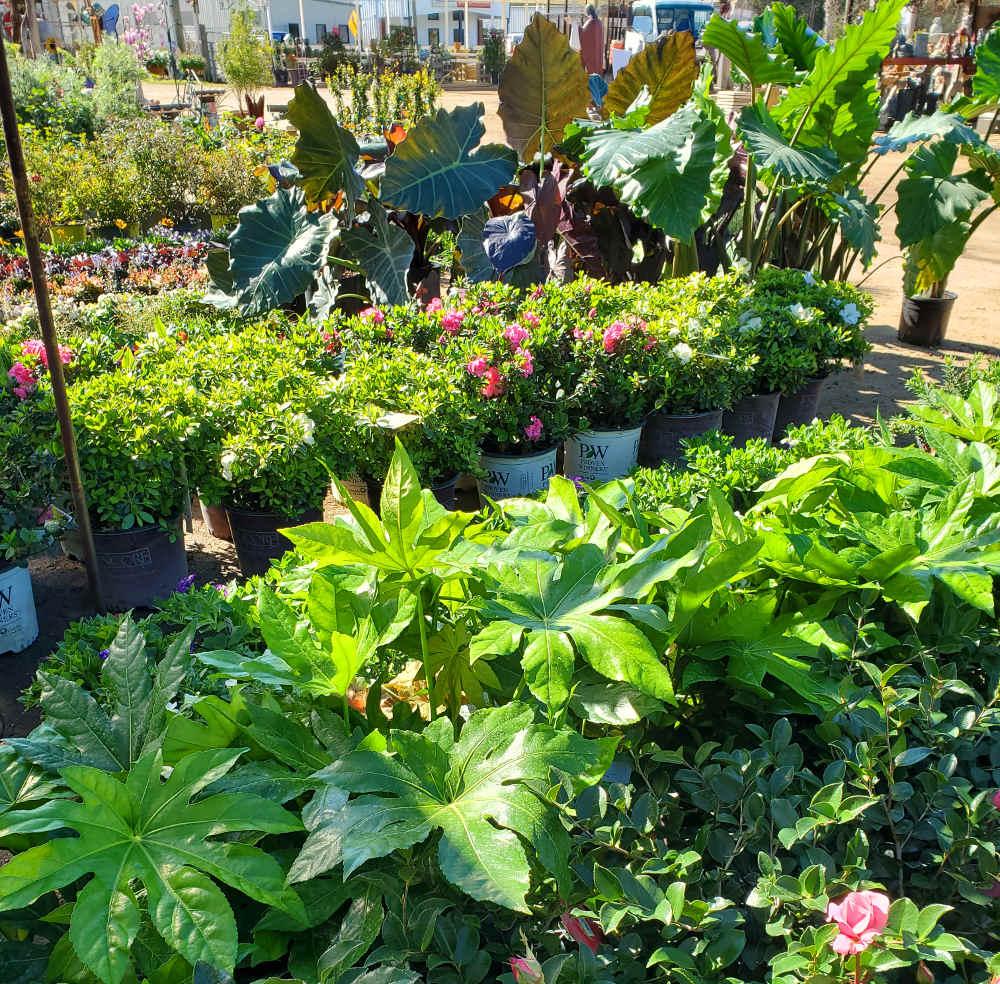Huge variety of plants!