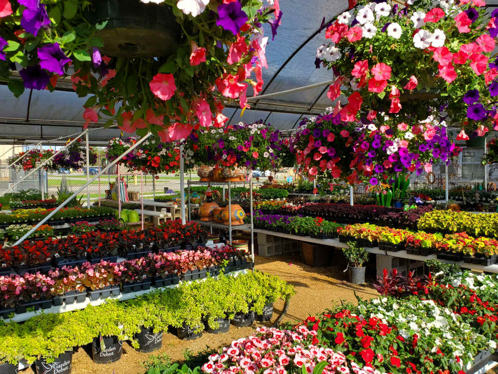 Madison Gardens Nursery has shelves of plants and hanging baskets for you!