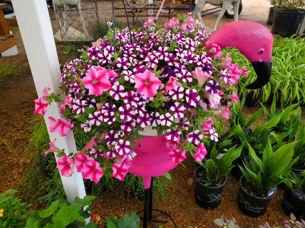 Petunia basket in a metal pink flamingo planter!