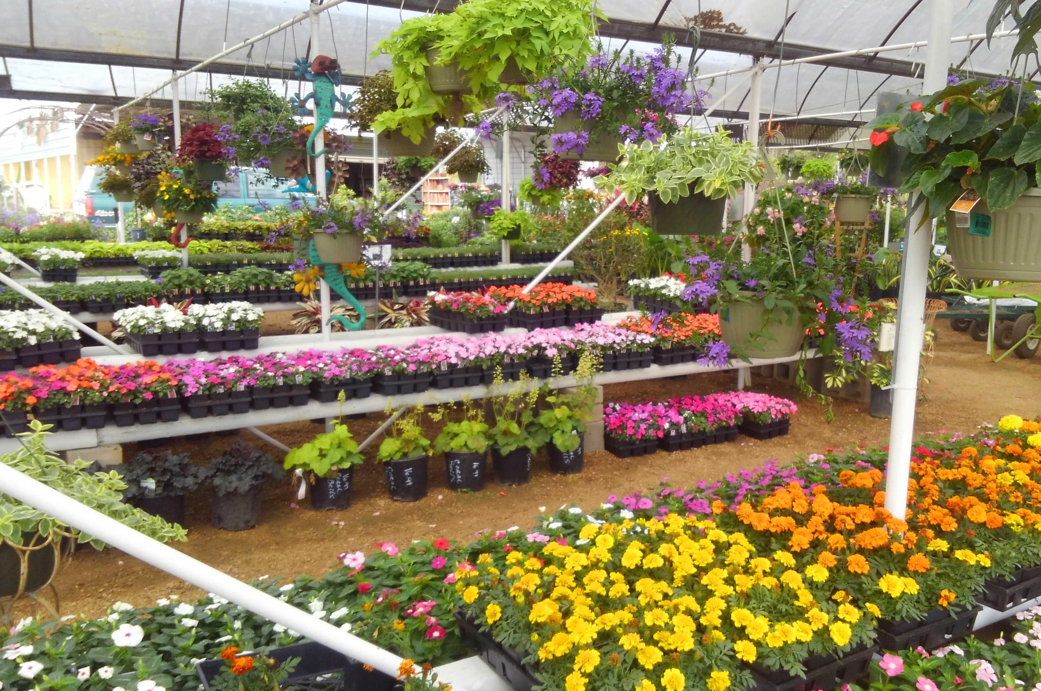 Madison Gardens Nursery 281 376 7625 Spring Tx