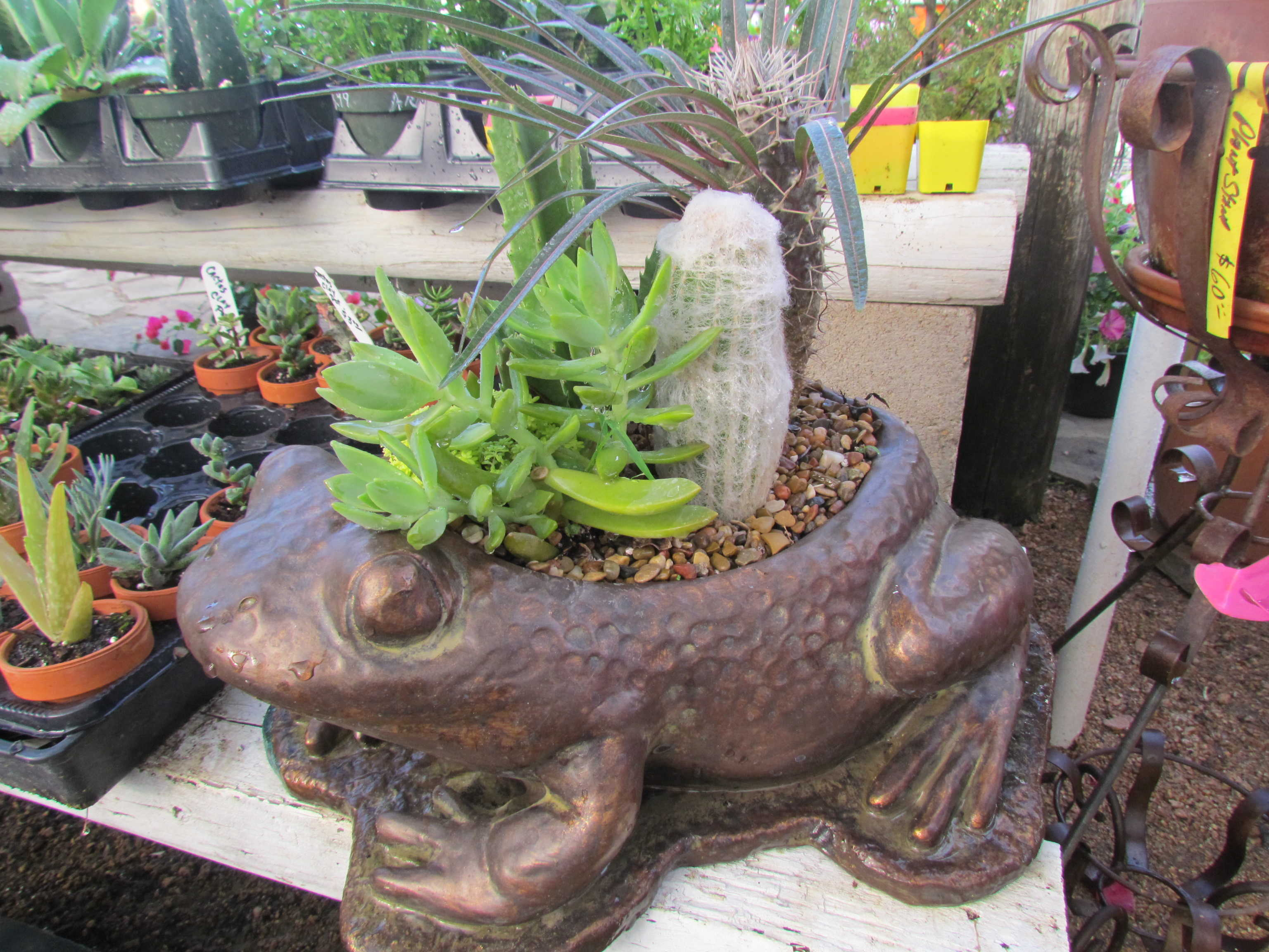 Succulents at Madison Gardens Nursery, Spring, TX