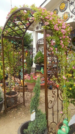 Climing roses and more at Madison Gardens Nursery, Spring, TX