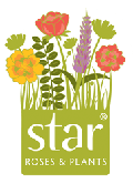 Star Roses and Plants at Madison Gardens Nursery, Spring, TX