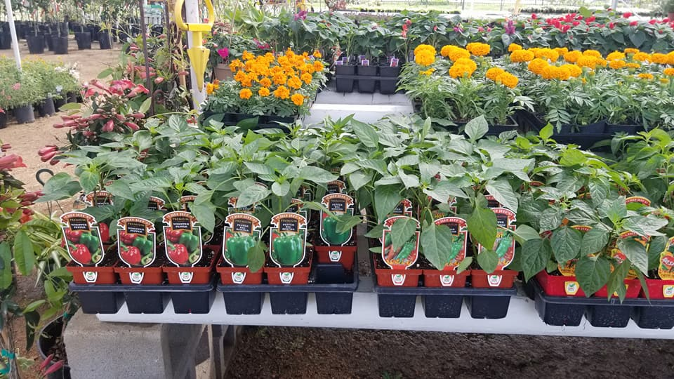 Tomato and Vegetables at Madison Gardens Nursery, Spring, TX